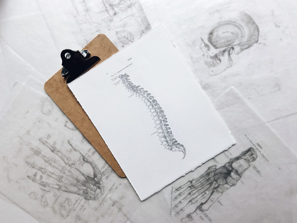 Pencil drawing of a spine